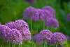 Peckham Rye Park (Adam Swaine) Tags: flora flowers peckhamryepark naturelovers nature parks londonparks spring seasons canon english england britain british beautiful 2018 uk petals