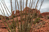 Cactus & Cathedral Rock (chasingthelight10) Tags: events photography travel landscapes canyons rockformations places arizona sedona cathedralrock