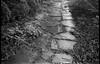 stone walkway, wet, rain, groundcover, conifer shrubs, yard, West Asheville, NC, Kodak VR35 K12, Kodak TMAX 400, Ilford Ilfosol 3 developer, 5.23.18 (steve aimone) Tags: walkway stone path pathway wet rain groundcover conifers yard wetlands northcarolina kodakvr35k12 kodaktmax400 ilfordilfosol3developer 35mm 35mmfilm film pointandshoot blackandwhite monochrome monochromatic landscape