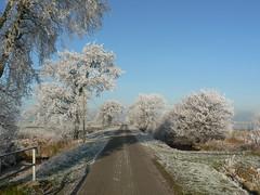 Dezember (achatphoenix) Tags: reif raureif hoarfrost kolk swartwolderkolk dezember december winter hiver enroute ontour ontheroadagain trees rheiderland eastfrisia ostfriesland