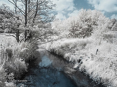 Gieselautal Albersdorf, Germany (peterkaroblis) Tags: infrarot infrared bäume trees bach creek