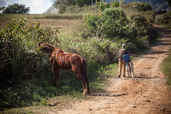 Cuba - Viñales (Cyrielle Beaubois) Tags: 2016 cuba cyriellebeaubois décembre travel explore wanderlust wander viñales countryside man cubano cuban horse travelphotography pinardelrío canoneos5dmarkii canonef70200mmf40lusm scenery bicycle discover