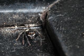 Spider at the Door - _TNY_3787