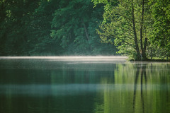 The Greenest Time of Year (freyavev) Tags: bärensee lake water stuttgart germany deutschland telelens zoom reflections reflection trees mikasniftyfifty watervapor atmosphere moody tree nature vsco canon canon700d outdoor