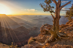 Grand Canyon Sunset (Bill Young) Tags: grandcanyon moranpoint grandcanyonnationalpark sunset weatheredtree