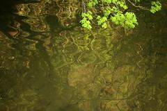 Leaves Mirrored (gripspix (OFF)) Tags: 20180420 haigerloch badenwürttemberg germany deutschland leaves blätter reflected refexion spiegelung eyach fluss bach river green grün golden