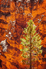 Bryce Canyon Pine Tree (EdBob) Tags: brycecanyon nationalpark tree pine colorful outdoors nature color rock sandstone geology geological red cliff hoodoo sun sunny utah usa america southwest desert spring americansouthwest edmundlowephotography edmundlowe allmyphotographsare©copyrightedandallrightsreservednoneofthesephotosmaybereproducedandorusedinanyformofpublicationprintortheinternetwithoutmywrittenpermission