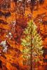 Bryce Canyon Pine Tree (EdBob) Tags: brycecanyon nationalpark tree pine colorful outdoors nature color rock sandstone geology geological red cliff hoodoo sun sunny utah usa america southwest desert spring americansouthwest edmundlowephotography edmundlowe allmyphotographsare©copyrightedandallrightsreservednoneofthesephotosmaybereproducedandorusedinanyformofpublicationprintortheinternetwithoutmywrittenpermission