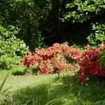Au jardin, Bosdarros, Béarn, Pyrénées Atlantiques, Aquitaine, France. thumbnail