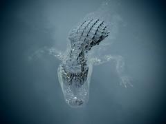 Closer (Emoya78) Tags: florida alligator