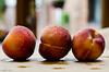 Peachy! (BGDL) Tags: lightroomcc nikond7000 nikkor50mm118g bgdl niftyfifty nikkorafsmicro40mm128g prestwick fruit peaches fooddrink week24 weeklytheme flickrlounge