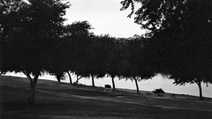 Dawn The Morning (Shot by Newman) Tags: bwphotograph daylight coloradoriver ilforddelta400 blackwhite ilfordbwfilm 35mm shotbynewman thepark trees bench morning mojavedesert southwest view 35mmminolta