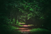 Camino en el bosque (Mimadeo) Tags: forest path trees tree dark shadow landscape light mystery mysterious ethereal darkness gloomy pathway footpath coniferous conifer spring springtime natural nature green