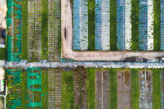 Aerial view of abandoned greenhouses in Vilnius, Lithuania (spot-on.lt) Tags: spring color scrub item evening lazdynai lithuania topdownview abandoned siltnamiai construction road food drone djiphantom4pro vilnius green landscape europe geometry greenhouse p4pro phantom phantom4pro travel above aerial capital unused