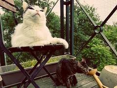 Cat life (francesca.clemente) Tags: