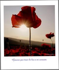 Colección postales: Gracias por traer la luz a mi corazón. (lameato feliz) Tags: alameda contraluz amapola frase naturaleza