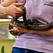 Held Black Rat Snake