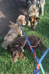 Port Warwick 6-6-2018 (Tobyotter) Tags: 2018 summerconcert portwarwick newportnewsva dogs link frank jimmydean