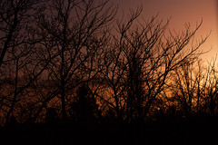 Sunset (TheWorldSleeps) Tags: sunset trees forest lost red redsky night nightphotography nighttime midnight sun branches twigs leaves searching camera canon