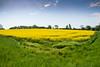 Rapeseed (Maria Eklind) Tags: countryside skåne landscape rapeseedfield rapsfält rapeseed raps outdoor malmö yellow oxie field skånelän sverige se
