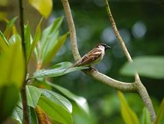 P1100319 (Jasardpu) Tags: zoo karlsruhe vogel tier animal bird