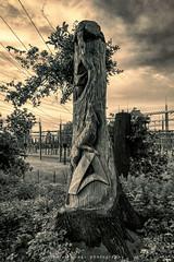 Holz Skulptur (fotos_by_toddi) Tags: fotosbytoddi voerde niederrhein nrw nordrhein westfalen wesel kreiswesel deutschland germany holz skulptur bnw schwarzweis schwarz weiss blackwhite white black fuchs eule gans stimmung