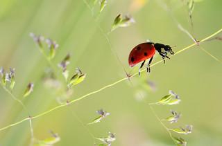 Ladybug's road...