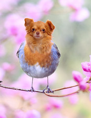 Tweetie Dog (Cat Girl 007) Tags: photomanipulation surreal animal cute dog canine face bird sitting perch adorable funny concept creative hilarious magical mythical makebelieve chimera hybrid digitalcomposite geneticmodification nobody creature fantasy