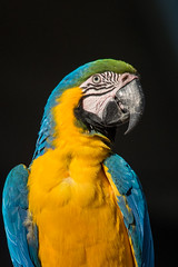 Macaw Portrait (Nature's Image Photography) Tags: macaw parrots birds malenybotanicgardens