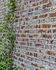 Brick with Vine (augphoto) Tags: augphotoimagery brick building exterior leaves nature old outdoors texture vegetation vines wall sharon georgia unitedstates