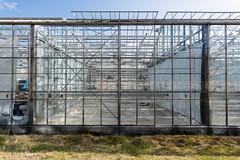 Greenhouse (genf) Tags: hveragerdi iceland ijsland greenhouse kas abandoned verlaten lines patters metal glass lijnen patronen glas metaal sony a99ii tamron 1530 outdoor sun buiten zon blauwe lucht blue sky