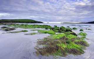 Unst, Shetlands.   Green and cloudy  morning sands 1