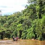 Bamboo rafting, Maetaeng elephants park thumbnail