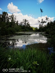 Pond lookout. (thnewblack) Tags: huawei p20 p20pro leica leicaoptics android smartphone nature outdoors beautiful britishcolumbia pond snapseed 40mp f16 hdr
