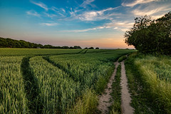 Billinge countryside (ianbonnell) Tags: fields billinge sthelens merseyside rural england summer countryside
