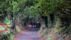 En el Bosque /  In the Forrest (López Pablo) Tags: forrest tree path green people pilgrim galicia spain wayofsaintjames nikon d7200 nature