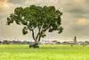 _Y2U5256.081.Nam Trực.Nam Định. (hoanglongphoto) Tags: asia asian vietnam northvietnam landscape scenery vietnamlandscape vietnamscenery vietnamscene countryside countrysideinvietnam fieldsrice sky cloud tree buffalo sunny sunlight homes house canon canoneos1dx canonef70200mmf28lisiiusm namđịnh phongcảnh làngquê nôngthôn làngquêviệtnam nôngthônviệtnam đồnglúa cây nhữngngôinhà contrâu bầutrời nắng