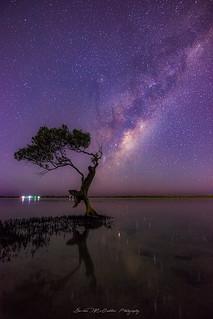 **Milky Way Tree**