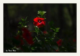 SHF_6983_Sunlight