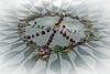 Imagine Mosaic (soboy5) Tags: imagine mosaic tile johnlennon beatles vignette manhattan nyc newyorkcity strawberryfields centralpark peace fuji fujifilm xt1 streetphotography
