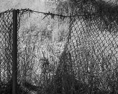 IMGP2146 (agianelo) Tags: fence opening wire monochrome bw blackandwhite ra entrance
