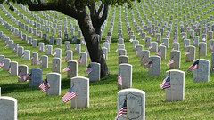 Honoring the multitudes (In Explore) (remiklitsch) Tags: green nikon pattern military cemetary flags tombstones tombs memorialday 2018 servicemen servicewomen lanationalcemetary remiklitsch blue red white tree la losangeles explore