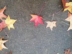 11-05-17 Dayton 51 leaves, fall color (Chicagoan in Ohio) Tags: dayton clouds sun sunhalo leaves fallcolor