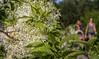 Strolling The Garden (Wes Iversen) Tags: chicagobotanicgarden glencoe illinois nikkor24120mm blooms blossoms bokeh flowers leaves people peoplekeh plants