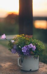 An old pot (Inka56) Tags: uprightformat crazytuesdaytheme 7dwf pot oldpot bouquet wildflowers sunset sunsetglow bokeh oldlens manualfocus throughherlens closeup dof goldenhour twilight
