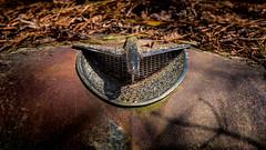 Inhaler (Wayne Stadler Photography) Tags: abandoned preserved junkyard georgia classic automotive derelict overgrown vehiclesrust rusty retro vintage oldcarcity rustographer rustography white
