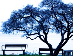 Blue Silhouttes ... (Irene, W. Van. BC) Tags: silhouttes bluesilhouettes trees treesilhouettes treebranches tree beautifulnature wonderfulnature bench benches seawalk seashore bright outdoors outdoorscenes outlines 1001nights 1001nightsmagiccity 1001nightsmagicwindow brightday brightsky