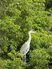 101_0420 (Elisabeth patchwork) Tags: bird reiher heron vienna wasserpark floridsdorf
