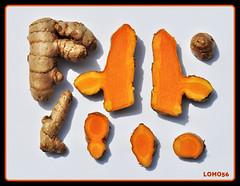 Kurkuma (Curcuma longa) (LOMO56) Tags: exotischefrüchte früchte asiatischefrüchte gewürze exotischepflanzen schnittbilder fruchtschnittbilder curcumalonga safranwurzel gelbwurzel curcuma