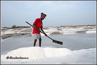 7928 - salt pans at Marakkanam